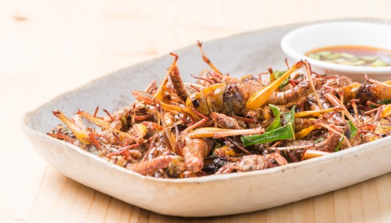 insect-meal