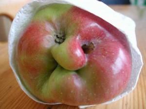apple-300x225