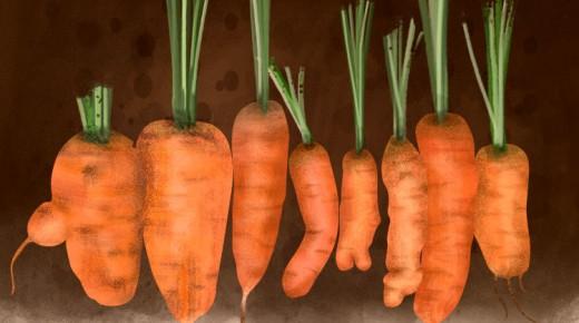 odd-carrots