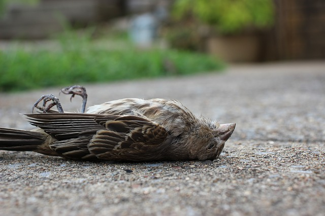 Why 5G experimentation must end  Did birds die in the Hague